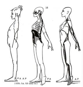 postero-anterieure en antero-posterieure spierketting