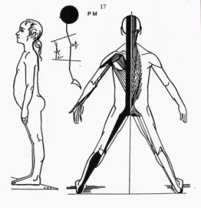 postero-mediane spierketting